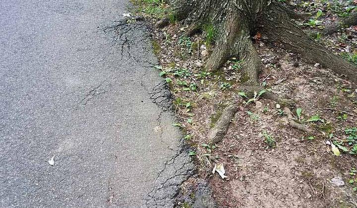 Broken Asphalt Road By A Tree