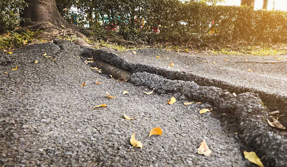 4 Tips on How to Combat Root Damage in Driveways and Parking Lots